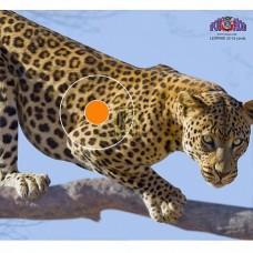 Мишень бумажная Spot Hogg Safari гепард