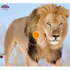 Мишень бумажная Spot Hogg Safari лев