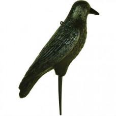 Чучело подсадное, ворона серая D73410