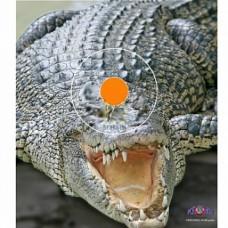 Мишень бумажная Spot Hogg Safari крокодил